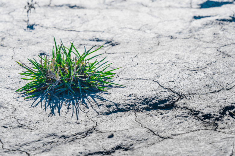 Dry soil in the time of drought